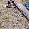 20120527_ambiance-papillonsdenuit_002